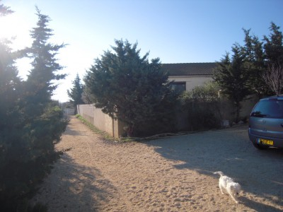 French property, houses and homes for sale in CAVES Aude Languedoc_Roussillon