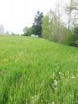 terrain à vendre à BOURG LASTIC, Puy_de_Dome, Auvergne, avec Leggett Immobilier