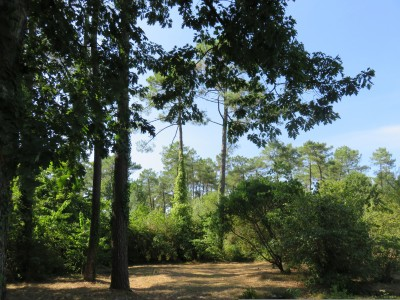 French property, houses and homes for sale in ST VINCENT DE TYROSSE Landes Aquitaine