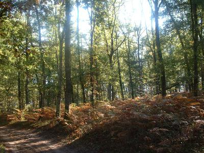 French property, houses and homes for sale in BARBASTE Lot_et_Garonne Aquitaine