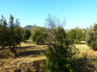 French property, houses and homes for sale in AMPUS Var Provence_Cote_d_Azur