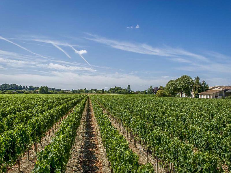 Commerce à vendre à BLAYE(33390) - Gironde