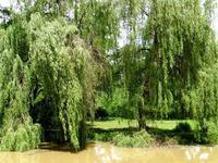 French property for sale in CASTILLONNES, Lot et Garonne - €320,000 - photo 4