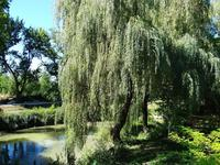 French property for sale in CASTILLONNES, Lot et Garonne - €320,000 - photo 3