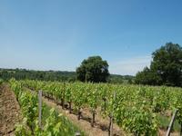 Commerce à vendre à BOURG en Gironde - photo 8