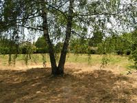 French property for sale in MEZIERES SUR ISSOIRE, Haute Vienne - €14,000 - photo 6