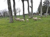 Terrain à vendre à ETAGNAC en Charente - photo 3