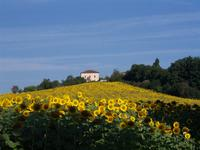 French property for sale in BEAUVILLE, Lot et Garonne - €570,000 - photo 10