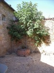 French property for sale in CAMPAGNE, Dordogne - €82,500 - photo 2
