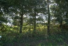 Terrain à vendre à L ABSIE en Deux Sevres - photo 4