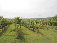 French property for sale in MONTPEZAT, Lot et Garonne - €340,000 - photo 10