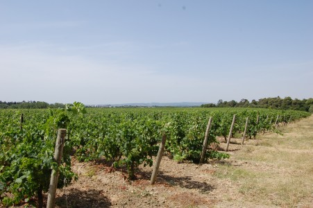French property, houses and homes for sale in VILLEMOUSTAUSSOU Aude Languedoc_Roussillon