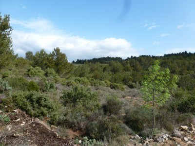 French property, houses and homes for sale in Minerve