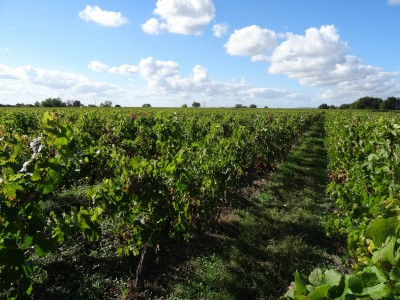 French property, houses and homes for sale in St André et Bordeaux Dordogne Aquitaine