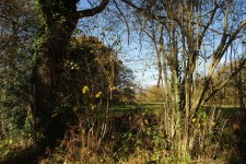 French property for sale in ST BARBANT, Haute Vienne - €19,000 - photo 5