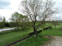French property for sale in ST SATURNIN DU BOIS, Charente_Maritime photo 9