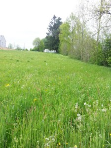 French property, houses and homes for sale in BOURG LASTIC Puy_de_Dome Auvergne