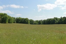French property for sale in TRELISSAC, Dordogne - €603,000 - photo 6