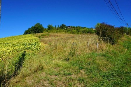 French property, houses and homes for sale in MONTVALEN Tarn Midi_Pyrenees