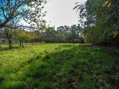 French property, houses and homes for sale in MONTBRON Dordogne Aquitaine
