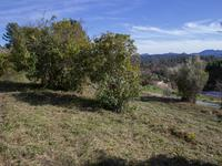 French property for sale in MONTAUROUX, Var - €199,500 - photo 5