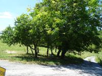 Terrain à vendre à MONTAGRIER en Dordogne - photo 2