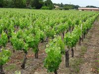 French property for sale in PAUILLAC, Gironde - €899,000 - photo 6