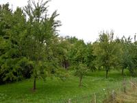 Terrain à vendre à  en Charente - photo 1