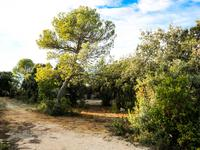 French property, houses and homes for sale inST SIFFRETGard Languedoc_Roussillon