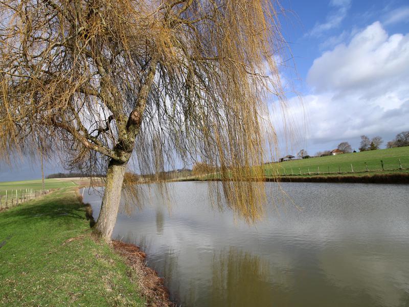 Lacs à vendre à CONDEON(16360) - Charente