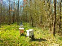 Forêts pour la conservation de la biodiversité ou du bois