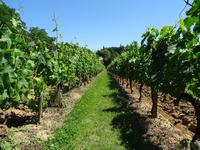 houses and homes for sale intownGironde Aquitaine