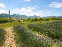 French property for sale in BELLECOMBE TARENDOL, Drome - €294,000 - photo 5