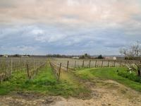 French property for sale in LIBOURNE, Gironde - €2,520,000 - photo 2