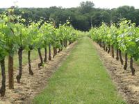 houses and homes for sale inLUSSACGironde Aquitaine
