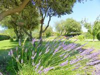 French property for sale in CASTILLON DU GARD, Gard - €404,000 - photo 10