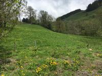 French property, houses and homes for sale in ALLANCHE Cantal Auvergne