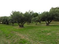 French property for sale in AUPS, Var - €160,000 - photo 6
