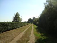French property for sale in ST SAUVEUR DE FLEE, Maine et Loire - €590,000 - photo 9