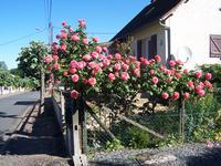 Maison à vendre à SAVIGNAC LEDRIER en Dordogne - photo 1