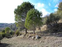 French property for sale in BESSE SUR ISSOLE, Var - €149,000 - photo 7