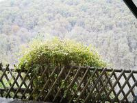 French property for sale in NAJAC, Aveyron - €159,500 - photo 4