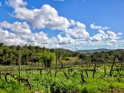 vineyardin MINERVE