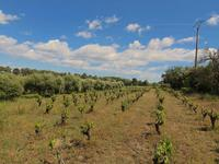 French property for sale in STE VALIERE, Aude - €246,100 - photo 5