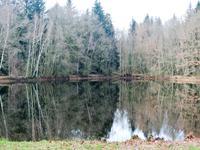 A vendre un grand étang de 10,000 m²,  terrain boisé de 53,000 m² et un petit étang poissonneux