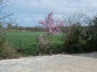 French property for sale in LA TRIMOUILLE, Vienne - €203,300 - photo 3