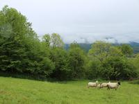 French property for sale in SEVIGNACQ MEYRACQ, Pyrenees Atlantiques - €93,250 - photo 3