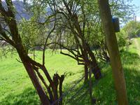 French property for sale in CIERP GAUD, Haute Garonne - €34,000 - photo 3
