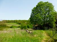 French property for sale in NONAC, Charente - €85,000 - photo 3