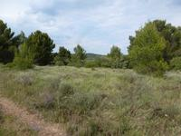 French property for sale in CRUZY, Herault - €175,000 - photo 10